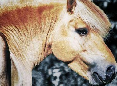 """Das """"nervige"""" Pferd …"""