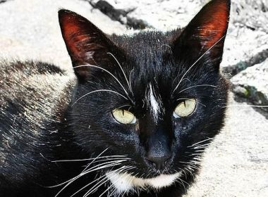 Katzenklo, Katzenklo – Wie groß soll's denn sein?