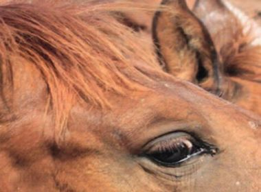 Verhaltensstörungen bei Pferden