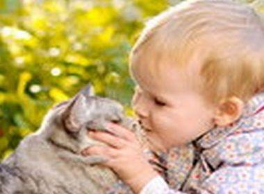 Alltag mit der Katze