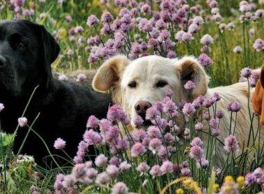 Mit dem Hund in Haus, Hof und Garten