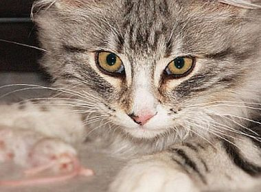 Katzen vegan oder vegetarisch ernähren?