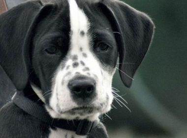 Ontogenese, die individuelle psychische Entwicklung von Hunden
