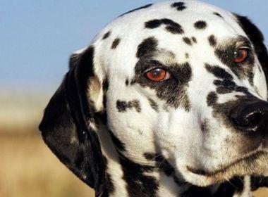 Welche Gene machen Hunde taub?
