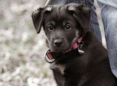 Brauchen Hunde einen Rudelführer?