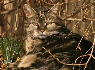 Buch: Tierarzttraining für Katzen