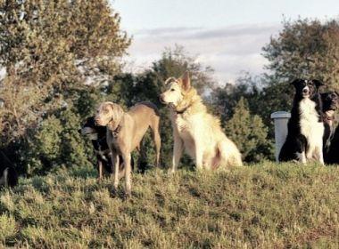 Hundekot: (K)eine Gefahr in Feld und Flur?