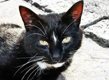 Vogelfeind: Katze oder Mensch?