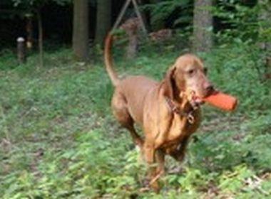Hunde: Pro & Contra Kastration
